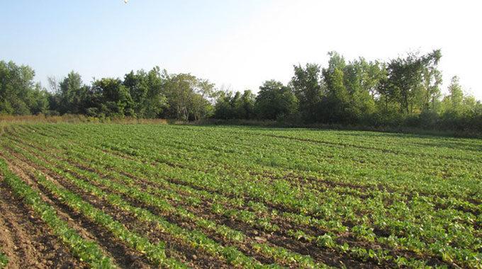 PEPS : Une Initiative Pour La Durabilité Agronomique Des Exploitations Agricoles