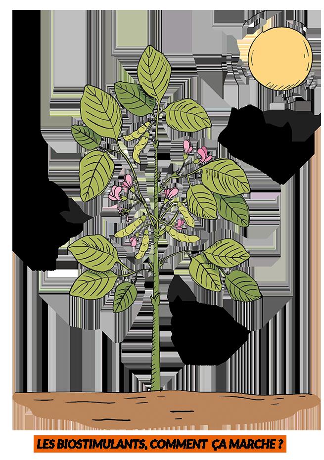 bio stimulant-agriculture.com