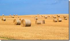 agriculture et transition énergétique-1