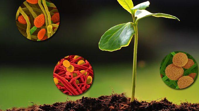 Biostimulant, Engrais, Anti-carentiel : Quelle Différence ?