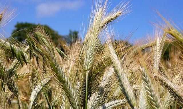 «Les Couverts Végétaux Ont Un Très Grand Intérêt» Jean-Yves Barge, Agriculteur Dans Le Rhône