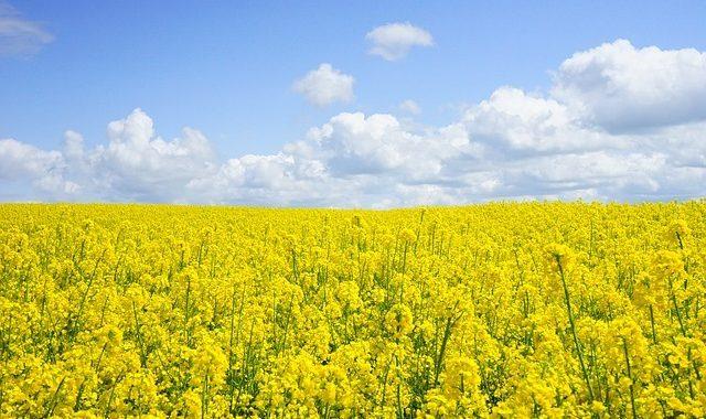 L'agriculture De Conservation Et L'agriculture De Précision M'ont Permis De Retrouver De L'autonomie Sur Mon Exploitation» David Vincent, Agriculteur En Grandes Cultures Dans L'Aude