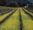 Impacts-agriculture-changement-climatique