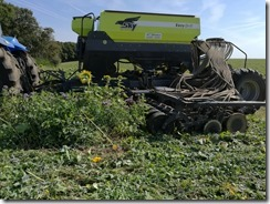 semis direct blé derrière OH sous couvert végétal à forte biomasse
