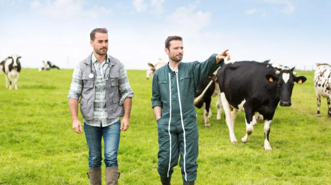 La Location De Vaches : Pour Qui Et Pourquoi ?